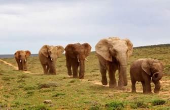 Addo Elephant Park Стоковые фото, иллюстрации и векторные изображения - Страница 2 Depositphotos